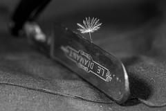 Sur le fil ... Macro monday ( jjuke44 ) Tags: macromonday rasoir dandelion shaver pissenlit coupant snipping handlewithcare