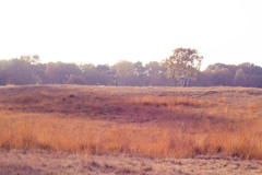 (shinebrightx) Tags: thenetherlands paisesbaixos holanda landscape nature autumn fall