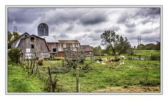 Barnyard scene (jsleighton) Tags: barn fence silo field horse cow bulls geese grass sky clouds