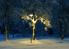 Lonesom tree (denNorskeh) Tags: narnia winter snow low light