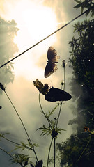 metamorphosis (Abhiram_Rajilan) Tags: nature photography pointshoot abhiramrajilan valentine household love buttefly