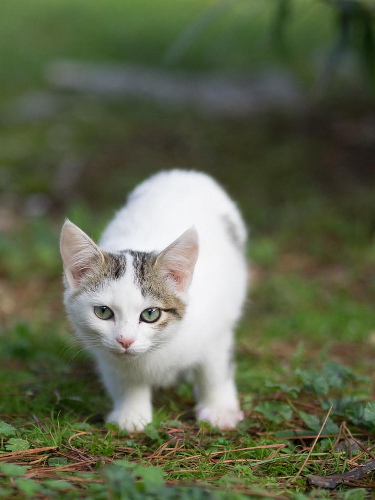 Stray Cat Rescue Corfu