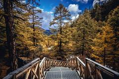DSC_2991 (juor2) Tags: road fall autumn d4 scene travel trait yadin sichuan china yellow river