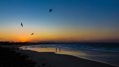 Evening with flying seagulls (Masa_N) Tags: byronbay seagulls beach silhouette winter seashore australia people sea evening seaside dusk newsouthwales オーストラリア au