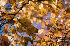 Leaves (Maria Eklind) Tags: citypark leaf sweden city kungsparken winter malm nature skneln sverige se