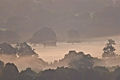 Ground Mist (Deepgreen2009) Tags: ground mist dawn morning weather moisture autumnal early wreathed cloaked trees rural