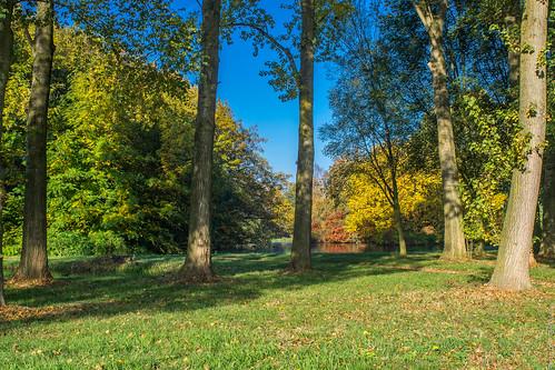 Herfst / Autumn - Steinse Groen - Haastrecht