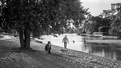 lazy afternoon  #797 (lynnb's snaps) Tags: apx100 r35s film rollei35s zeiss40mmf28sonnar 35mmfilm rodinal dogs park water lake tree sand relaxing people shadows 2016 sydney