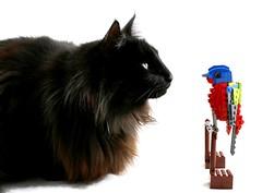 Cat and LEGO bird (naughty cat) (AzureBrick) Tags: lego bird norwegian forest cat light box