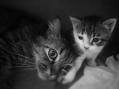 Pequena grande família! (deisegomes1) Tags: gatinho babycat animal nature family familia filhote miau neco felino gatito gato cat
