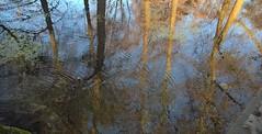 Riflessi alle Sette Fontane (Massimo Caccia) Tags: riflessi acqua water ticino piemonte pian pianura