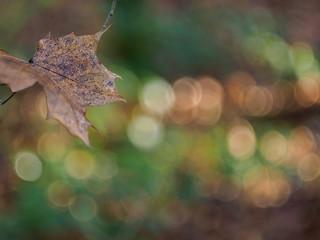 Leaves & Lights (1)
