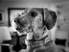 Hound II (#Weybridge Photographer) Tags: adobe lightroom canon eos dslr slr 5d ii goodwood house hound lodge statue west sussex mkii westsussex stone hotel stately home