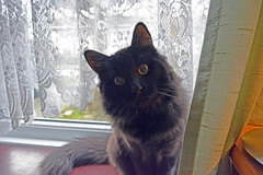 - Did you call me? (Caulker) Tags: vaska cat kitten 16112016