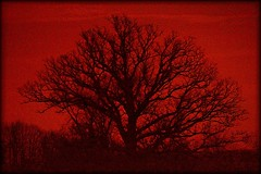 The Wise, Old Tree (dianealdrich - Please read my profile) Tags: tree trees wise wisdom old treebranches eve evening dusk orange orangetones orangecolor silhouette contrast grainy newyork upstatenewyork