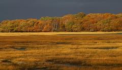 Autumn Colours at Arne - Dorset 171116 (2) (Richard Collier - Wildlife and Travel Photography) Tags: autumn autumncolours dorset rspbarne landscape englishlandscape coth5 ngc npc