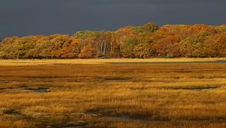 Autumn Colours at Arne - Dorset 171116 (2)
