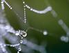 Water Jewels II (jocsdellum) Tags: macro gotas gotes drops aigua agua water naturejewels natura naturaleza web telaraña bokeh