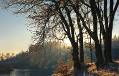 a cold dawn (ParadoX_Design) Tags: annashoeve hilversum netherlands holland nature landscape dawn nikond5300 lake lakeside tree sunlight sun winter december cold frost ice temperature
