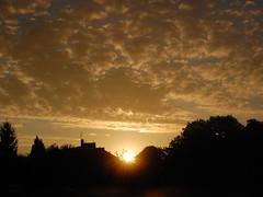 CSC_0082 (azalicja) Tags: sky sunset