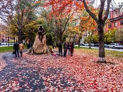 Commonwealth Ave Mall ((Jessica)) Tags: boston massachusetts unitedstates us commonwealthave leaves season seasonal fall carpetofleaves outdoors seasons autumn