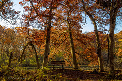 Marsh (david.horst.7) Tags: marsh fall autumn bench pond woods forest timber leaves