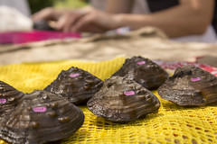 Mussel Diversity Section Title 2 (wsrstorymapphotos) Tags: animal mussels endangered freshwater tags