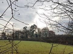 Treeline (Tammy Jackson) Tags: treeline trees