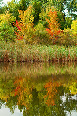 autumn's reflection (Shandi-lee) Tags: autumn trees red orange plants reflection tree green fall nature water beautiful leaves yellow composition outside outdoors interesting pond outdoor naturallight symmetry fresh september balance plantlife twoobjects latesummer naturallighting 2015 canoneos7d shandilee shandileee shandileecox