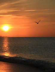 t sabes que tuvimos alas (RalRuiz) Tags: espaa sol mar andaluca agua huelva amanecer ave cielo nubes atlntico ocanoatlntico islacristina puntadelcaimn