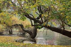 (B Plessi) Tags: parco milan tree alberi italia milano sempione