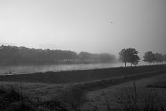Matin d'automne (celinadayton) Tags: blackandwhite mist nature water fog landscape outside canal eau belgium belgique noiretblanc paysage extrieur brouillard channel brume lige herstal