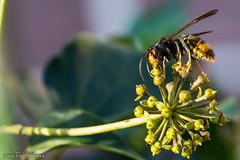 Dark Creature (Patxi Villegas) Tags: espaa flower macro insect is high photobooth flor bugs bilbao iso usm bizkaia photostream paisvasco highiso insecto equipos numan f28l ef100mm placesyouvisit ef100mmf28lmacroisusm canoneos7dmarkii equiposnuman numanmania