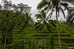 Bali-5