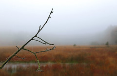 bogland, area for wet feet and 'witte wieven' (HansHolt) Tags: autumn mist fall water netherlands fog canon mos landscape moss drops branch herfst cobweb bog desolate tak drenthe 6d spinnenweb eenzaam druppels wittewieven wetfeet moeras verlaten canonef24105mmf4lisusm moorgrass purplemoorgrass moliniacaerulea pijpenstrootje canoneos6d gijsselte nattevoetren