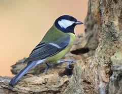 _MRC1871 (Obsies) Tags: bird nikon outdoor pajaros d4 400mmvr