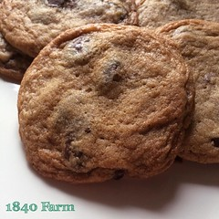 "A member of our 1840 Farm Community wondered how to make crisp chocolate chip cookies like those in the photo I shared this afternoon. I was happy to share with her and now I'll share the same information with you.   I find that if you reduce the oven tem • <a style=""font-size:0.8em;"" href=""http://www.flickr.com/photos/54958436@N05/23327405053/"" target=""_blank"">View on Flickr</a>"