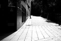 With the small dog (pascalcolin1) Tags: paris13 dog chien soleil sun ombre lumire light shadows pavement ruepav photoderue streetview urbanarte noiretblanc blackandwhite photopascalcolin