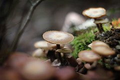 (Yannick WEISS) Tags: forest mushroom beyondbokeh carl zeiss biotar