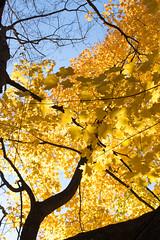 Golden jungle4_MG_1336 (CFurjanic93) Tags: pennstate pennstateuniversity trees fall fallsession stude students college collegecampus bikes sun warmth foliage sky bikerack golden yellow orange