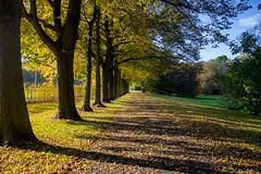 Herbstspaziergang im Park (fplderl) Tags: fall autumn herbst bltter leaves golden gold oktober october spaziergang natur landscape nature walk sun sonnig sunny sky himmel laub