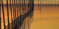 Albufera-Valencia. (Luis M) Tags: paisaje puestadesol valencia albufera abstracto redes agua
