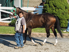 Angry Patty (avatarsound) Tags: boston suffolkdowns horse horseracing jockey race racetrack racing