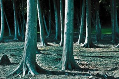 Blackwood (emerge13) Tags: steustachequbec forests forts trees arbres spiritofphotography thegalaxyhalloffame saariysqualitypictures