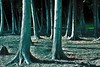 Blackwood (emerge13) Tags: steustachequébec forests forêts trees arbres spiritofphotography thegalaxyhalloffame saariysqualitypictures