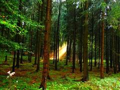 magic light (Sophia-Fatima) Tags: bramschekalkriese niedersachsen deutschland wald forest magiclight