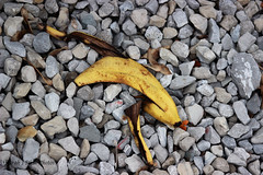 Shed Skin Of The Fruit (SarahJDhue) Tags: sarahjdhue sarahjdhuephotos worldwide photo walk 2016 scott kelby stcharles mo missouri usa outdoors shed skin fruit banana peel trash rotting gravel rock canon t3i eosrebel