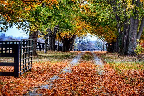 An Autumn Drive #fallcolors🍁🍂 #autumn2016🍁 #sharethelex #kytourism #horsefarmcountry #naturephotography