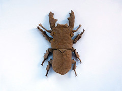 Stag beetle October 2016 (bodorigami) Tags: origami beetle stagbeetle stag hirschkfer kfer complex paper art brown insect insekt