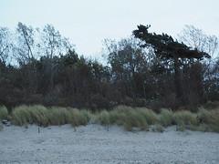 Rough Sea (BCHTLCK) Tags: warnemnde rostock ostsee meckpomm mecklenburgvorpommern easternsea mecklenburghitherpomerania rauesee roughsea trees bume